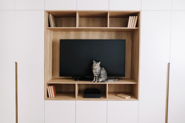 Милый кот в современном интерьере гостиной с телевизором и белым шкафом в скандинавском стиле минималистичная концепция