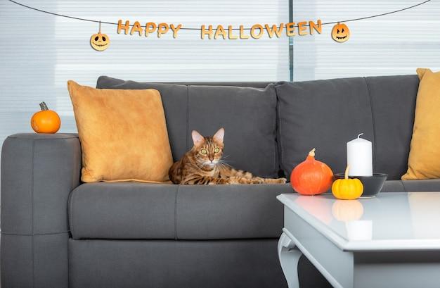 할로윈을 위해 장식된 방의 소파에 귀여운 고양이가 누워 있다
