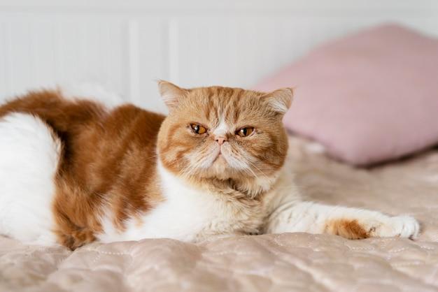 침대에 누워 귀여운 고양이
