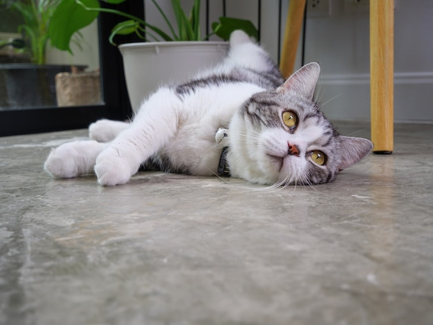 Cute cat lie on floor with air purifier tree monstera flower pot in living room