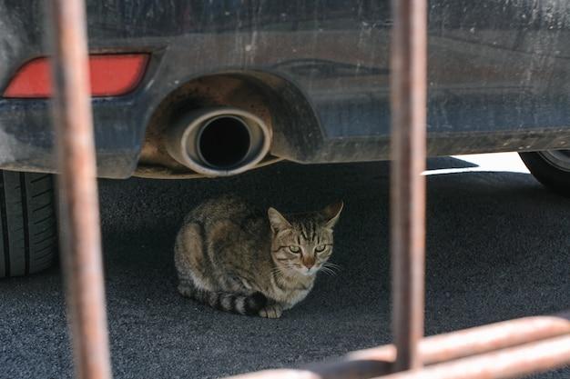 かわいい猫はサイレンサーの横にある車の下にあります。
