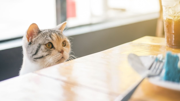 Cute cat looking at food on a wooden table.