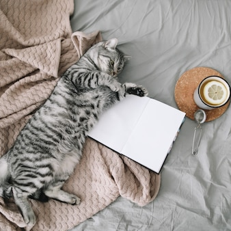 Cute cat lying in bed with a book and a cup of lemon tea.