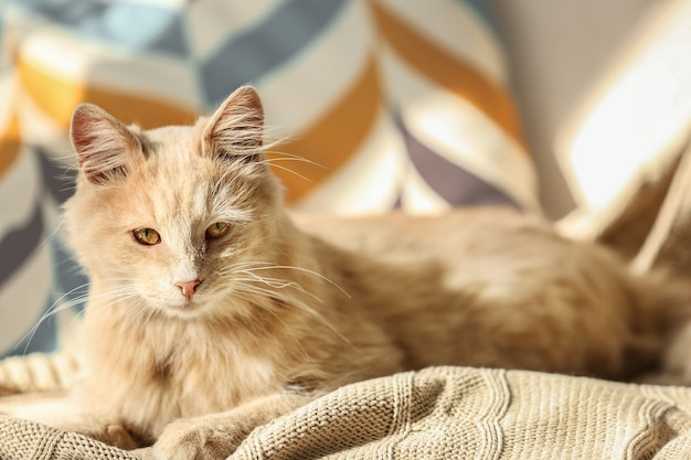 Cute cat lying on beige plaid at home
