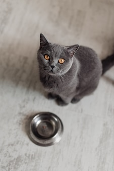 Cute cat lying near bowl with food on floor at home