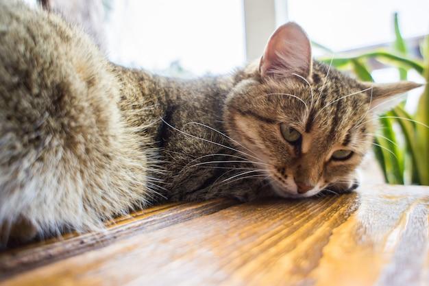 Милый кот лежал на деревянном столе. домашние животные и концепция млекопитающих.