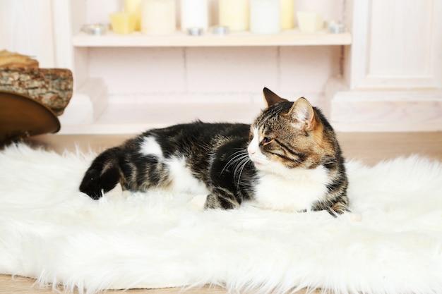 暖炉の前のカーペットの上に横たわっているかわいい猫