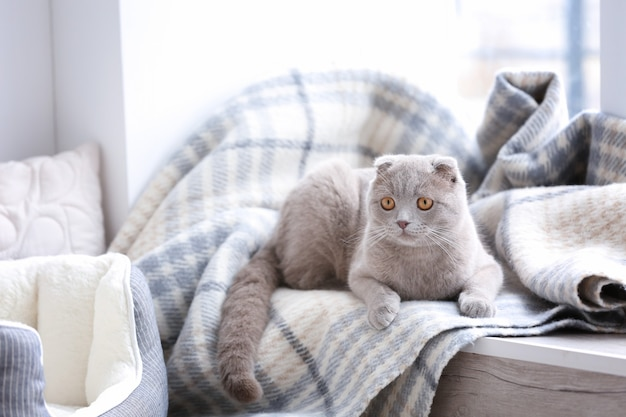 Cute cat lying on window sill covered with soft plaid