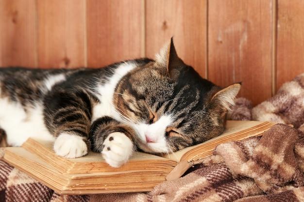 Милый кот, лежащий с книгой на пледе