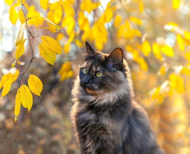 Cute cat near tree in autumn