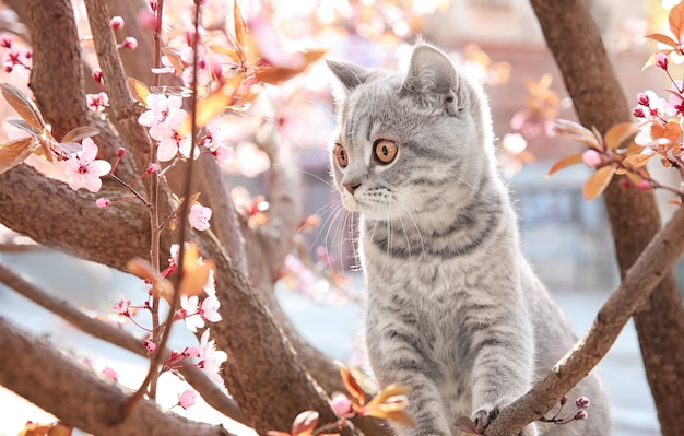 Милый кот на цветущем дереве на открытом воздухе