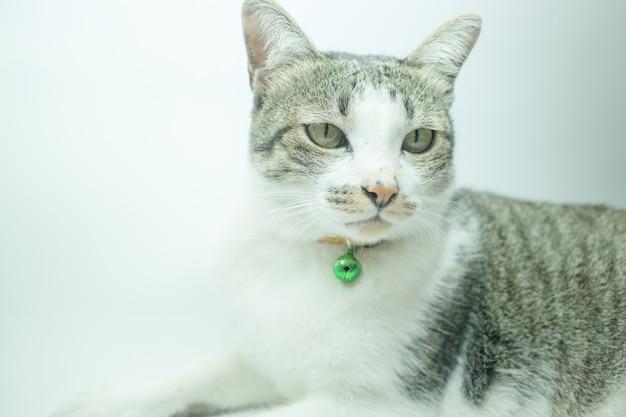 Симпатичный портрет кошки, одетый в защитный ошейник в расслабляющее время