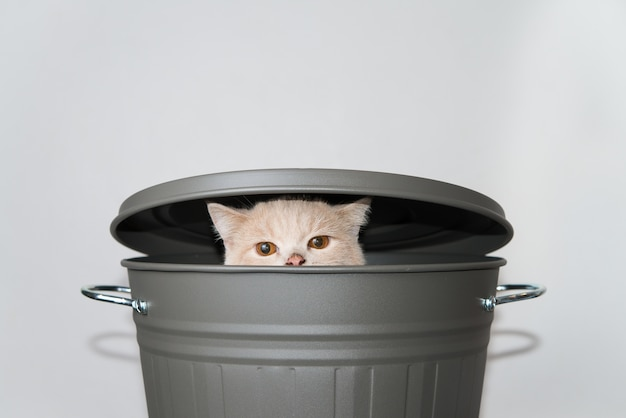 Cute cat rising from a grey bucket with lid.