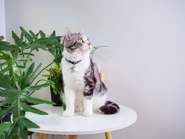 귀여운 고양이는 테이블에 앉아 있고 공기 청정기 나무 몬스테라, 거실의 산세베리아