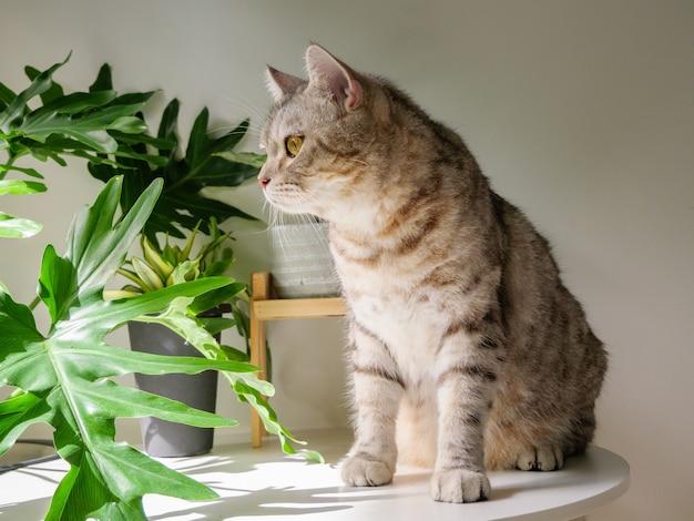Милый кот сидит на столе и дереве очистителя воздуха монстера, сансевиерия в гостиной