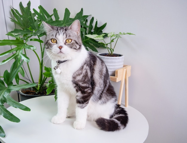 Cute cat sit on table and air purifier tree monstera,sansevieria  in living room