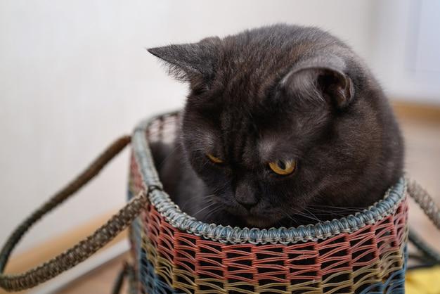 かわいい猫がバスケットに座っています