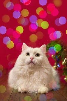 Милый кот сидит на фоне разноцветного боке на красном фоне, новогодняя рождественская картинка