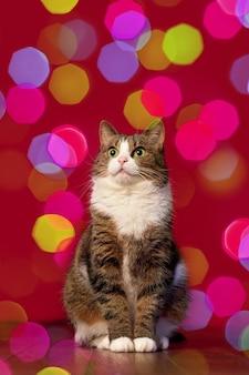 Милый кот сидит на фоне разноцветных боке на красном фоне новогодняя рождественская картинка