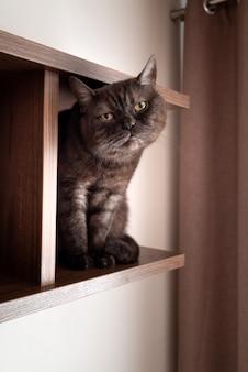 かわいい猫は空の木製の本棚に座っています