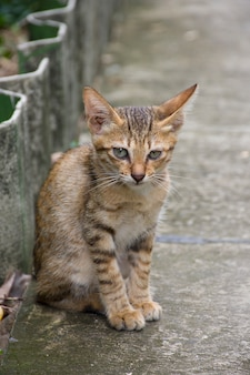 A cute cat sits on a pavement.