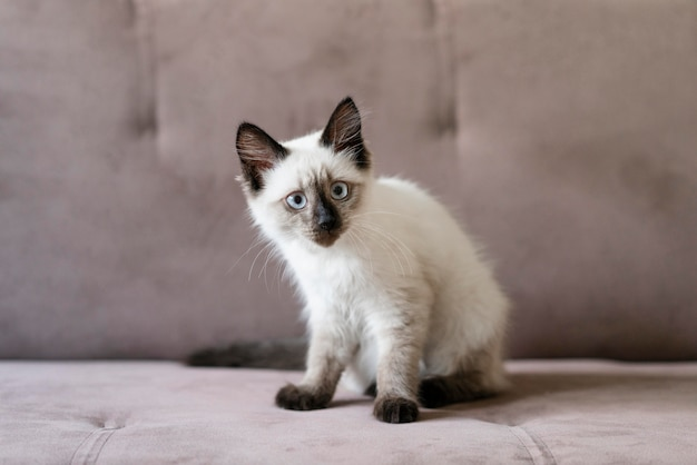 Cute cat sitting on couch