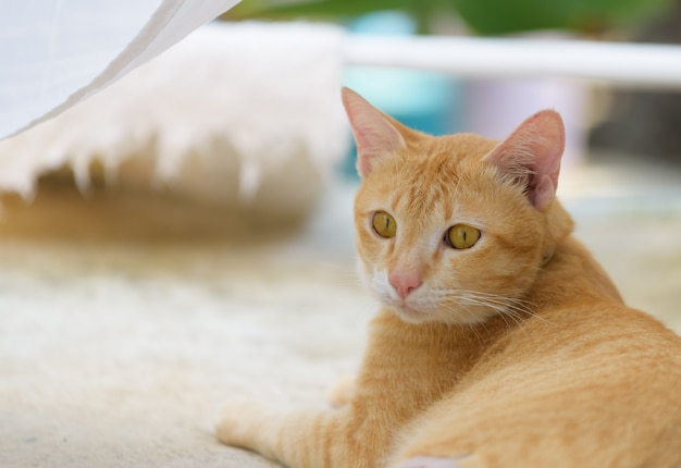 Cute cat sitting on grunge cement floor