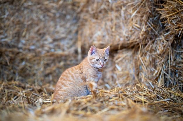 昼間に捕らえられた納屋に座っているかわいい猫