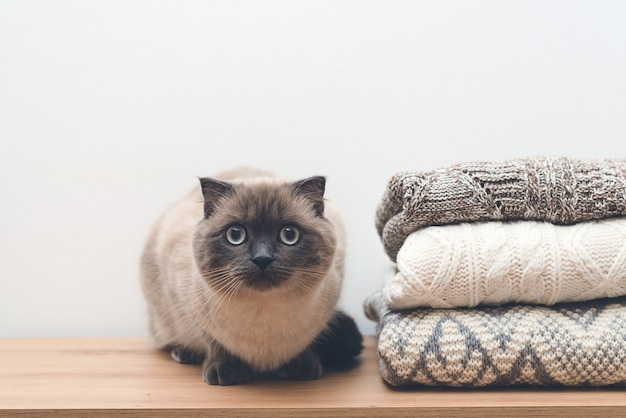 ニットのスタックの近くに座っているかわいい猫。暖かいニットセーター。ワードローブのふわふわペット。居心地の良い家の背景。秋冬シーズンのニットウェア。ニットカラーの洋服、ヴィンテージスタイル。