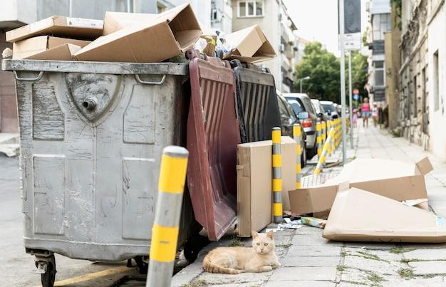 Милый кот сидит рядом с мусорным ведром на открытом воздухе