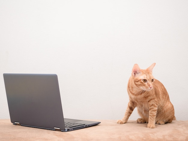 Cute cat sitting on sofa with laptop with white wall background