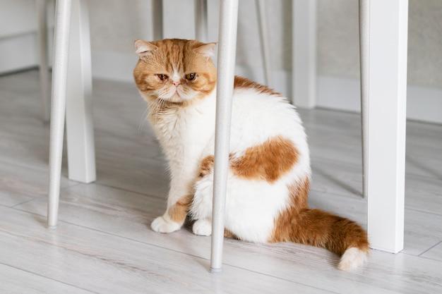 의자 아래에 앉아 있는 귀여운 고양이