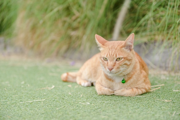Cute cat sleep on green carpet