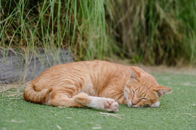 Cute cat sleep on green carpet