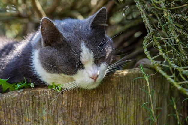 귀여운 고양이는 정원의 식물 사이에 자리 잡고 잔다