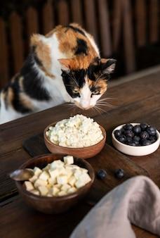Милый кот, пахнущий сыром