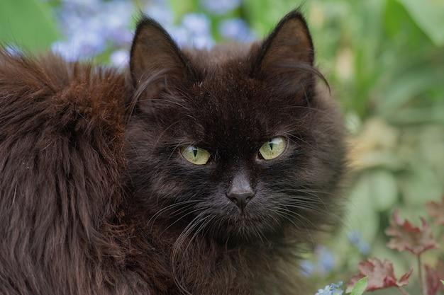 Симпатичная кошка, стоящая на открытом воздухе в весеннем или летнем поле цветов
