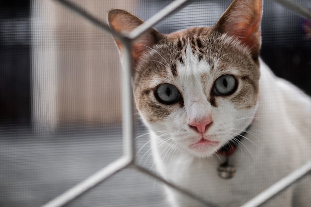 A cute cat stared with suspicion and looking through the house fence,