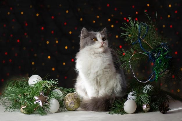 クリスマスツリーと装飾が施されたかわいい猫
