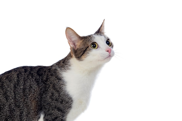 Cute cat with amazing green eyes isolated on a white background