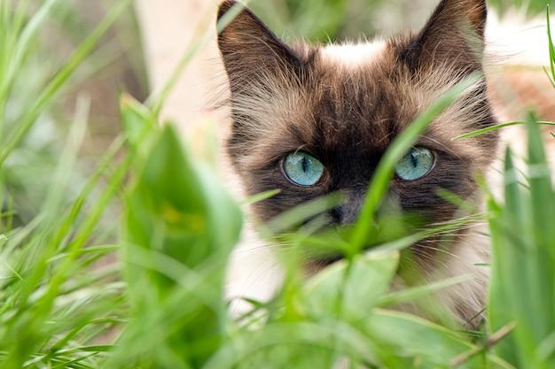 Gatto sveglio con gli occhi azzurri nel giardino