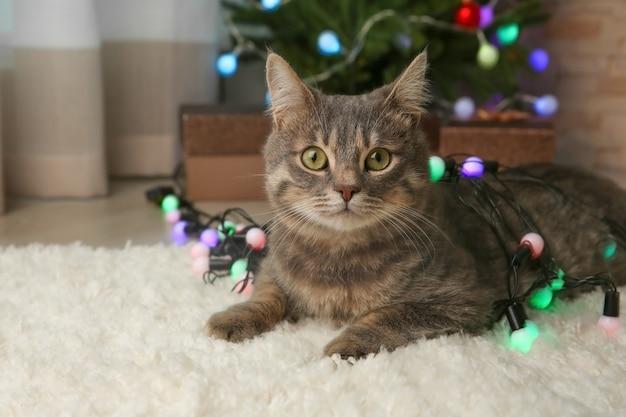 집에서 크리스마스 화환을 가진 귀여운 고양이