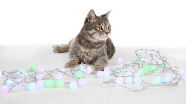 Милый кот с рождественской гирляндой на белом фоне