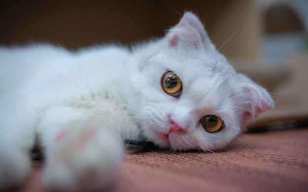 Cute cat with clumsy facial expression