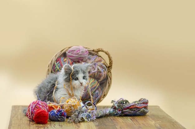 Cute cat with colorful wool yarn balls