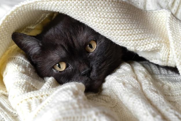 黒い毛皮のかわいい猫が暖かい毛布の下で眠る