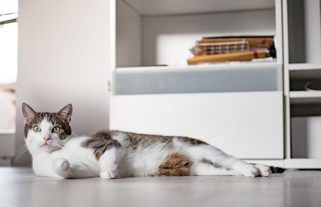 흰색 바닥에 누워 녹색 눈을 가진 귀여운 고양이. 배너, 복사 공간, 가까이, 배경. 사랑스러운 국내 애완 동물 개념.