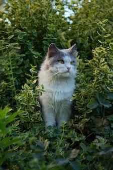 Милый кот с длинными усами. портрет кошки крупным планом в саду. забавный молодой кот с желтыми глазами.