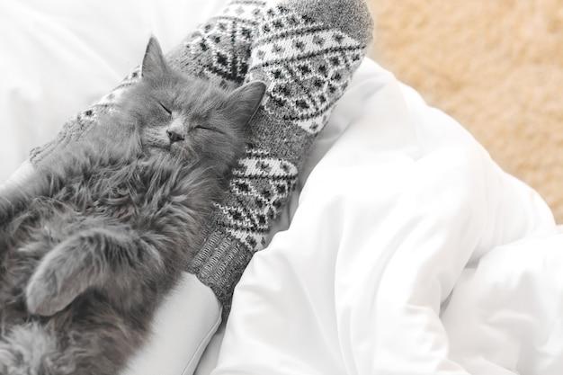 Милый кот с хозяином, отдыхая на кровати. понятие отопительного сезона