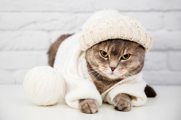 Cute cat with sweater and hat